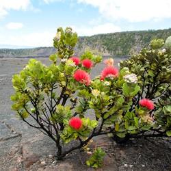 ハワイ諸島のお花たち;